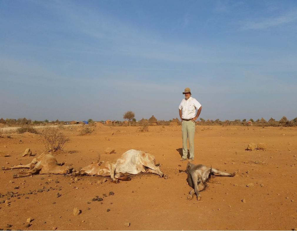 Cuando hasta los camellos se mueren de sed